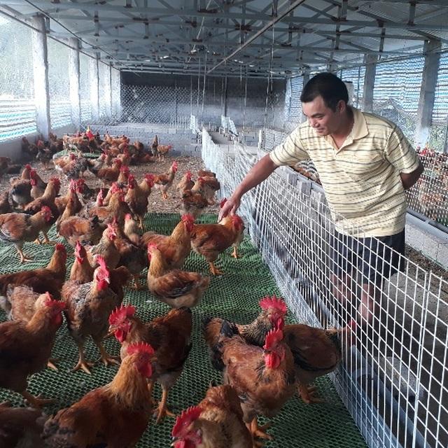 Mãn hạn tù về nuôi gà Trung Quốc, cứ bán 1 lứa lãi gần 50 triệu đồng - 1
