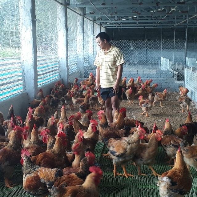 Mãn hạn tù về nuôi gà Trung Quốc, cứ bán 1 lứa lãi gần 50 triệu đồng - 3