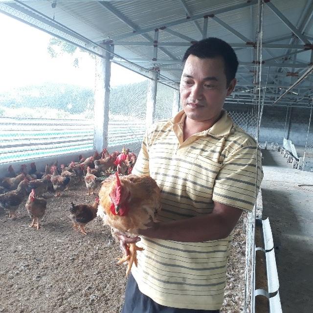 Mãn hạn tù về nuôi gà Trung Quốc, cứ bán 1 lứa lãi gần 50 triệu đồng - 4