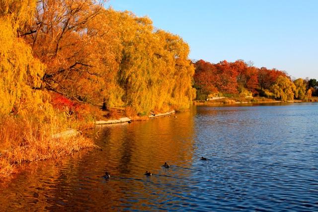 Mùa thu đẹp như tranh vẽ ở xứ sở lá phong - 1