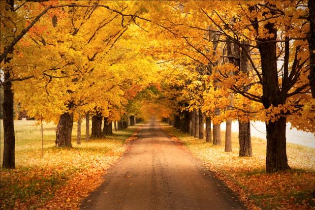 Mùa thu đẹp như tranh vẽ ở xứ sở lá phong - 3