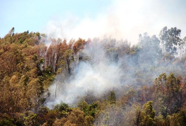 10 ha rừng bị thiêu rụi trong 26 tiếng: Nghi do đốt ong lấy mật - 3