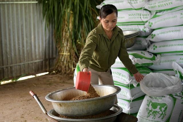 Nông dân Vĩnh Phúc vắt sữa bò kiếm tiền tỷ mỗi năm  - 2