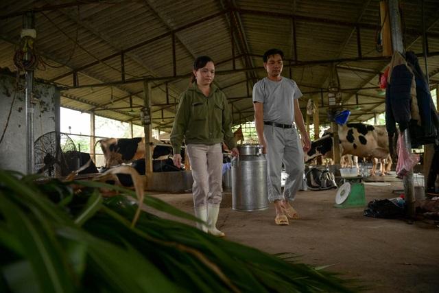 Nông dân Vĩnh Phúc vắt sữa bò kiếm tiền tỷ mỗi năm  - 13