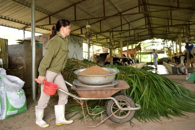Nông dân Vĩnh Phúc vắt sữa bò kiếm tiền tỷ mỗi năm  - 5