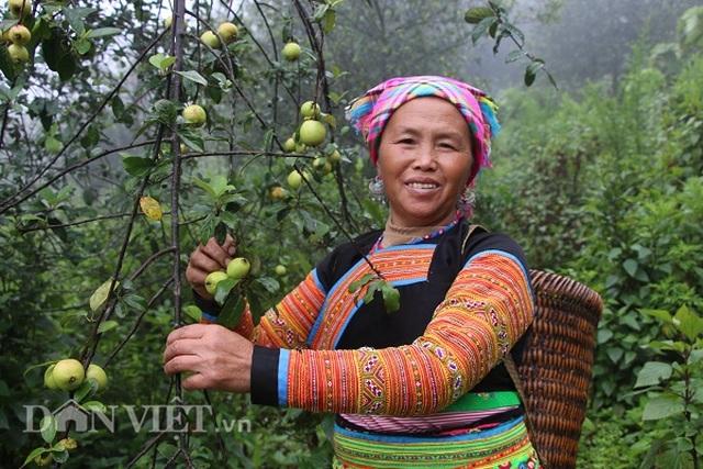 Tỷ phú người Mông làm giàu nhờ giống táo bé tí trên rẻo cao mây mù - 1
