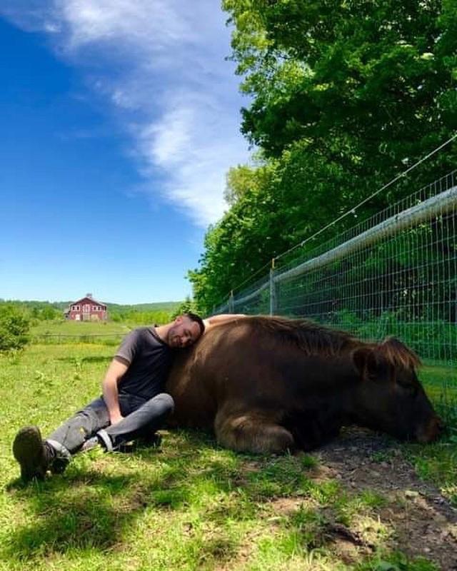 Bỏ ra 1,7 triệu để… ôm bò trong một tiếng - 2