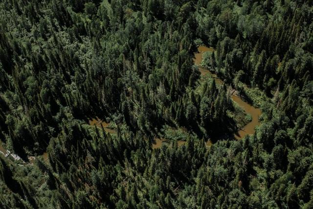 """""""Cơn khát"""" gỗ của Trung Quốc càn quét những cánh rừng ở Nga - 1"""