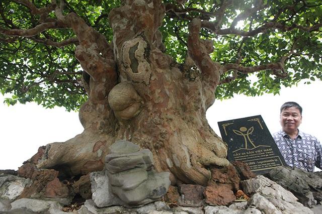 Mê tít bằng lăng hình nấm khổng lồ giá hàng tỷ đồng của đại gia Phú Thọ - 3