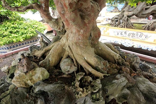 Mê tít bằng lăng hình nấm khổng lồ giá hàng tỷ đồng của đại gia Phú Thọ - 5