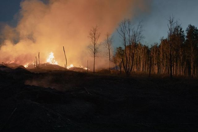 """""""Cơn khát"""" gỗ của Trung Quốc càn quét những cánh rừng ở Nga - 4"""