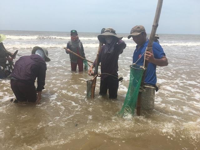 Nghề đi lùi cào ngao ở biển Quỳnh xứ Nghệ, kiếm 300 ngàn/ngày - 2