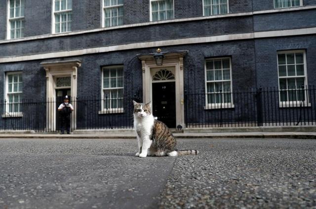 Sau tổng quản mèo, dinh thủ tướng Anh có thể có đệ nhất khuyển - 1