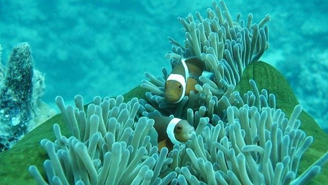 5 điểm ngắm san hô đẹp nhất Việt Nam, nhất định phải khám phá một lần trong đời - 6