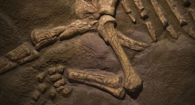 Tìm thấy xương đùi dài hai mét 140 triệu năm tuổi - 1