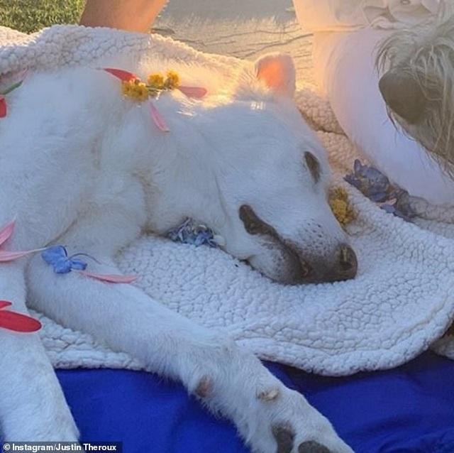 Jennifer Aniston và chồng cũ tái ngộ vì cún cưng - 4