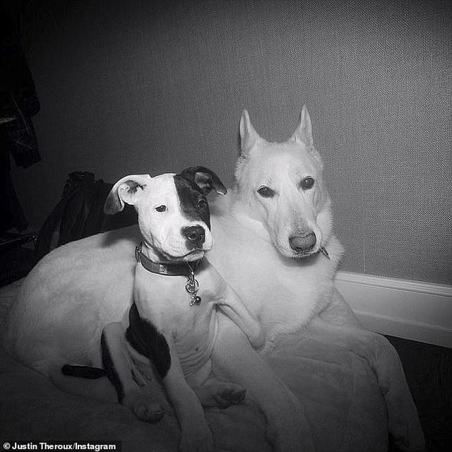 Jennifer Aniston và chồng cũ tái ngộ vì cún cưng - 7