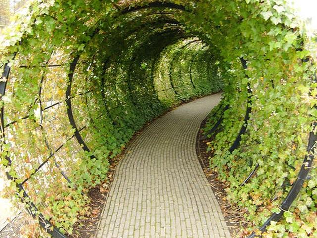 Khu vườn kỳ lạ: Nơi chạm vào cây cũng gây chết người - 2
