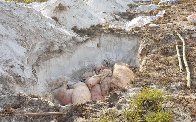 Xã tự ý thu tiền dân chuyển lợn bệnh đi chôn