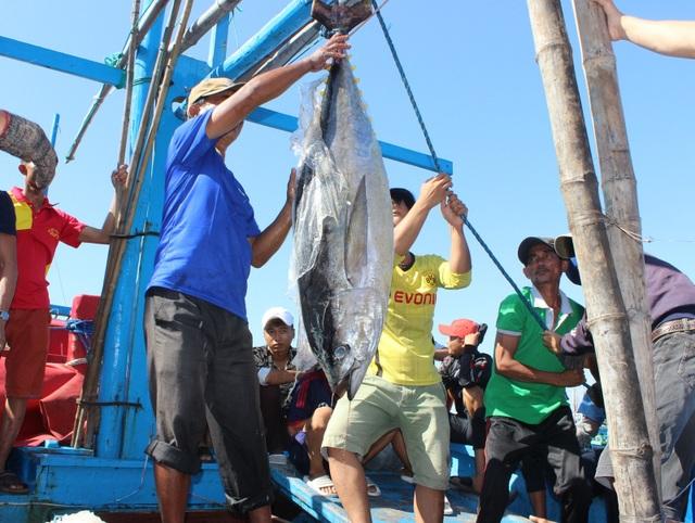 Phú Yên: 145  tàu cá nằm bờ giữa mùa cá ngừ vì ...chiều dài dưới 15 m - 4