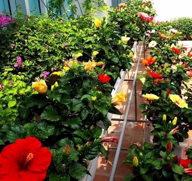 Bí quyết chăm sóc cây cảnh để vườn nhà luôn xanh mướt bất chấp nắng nóng - 7