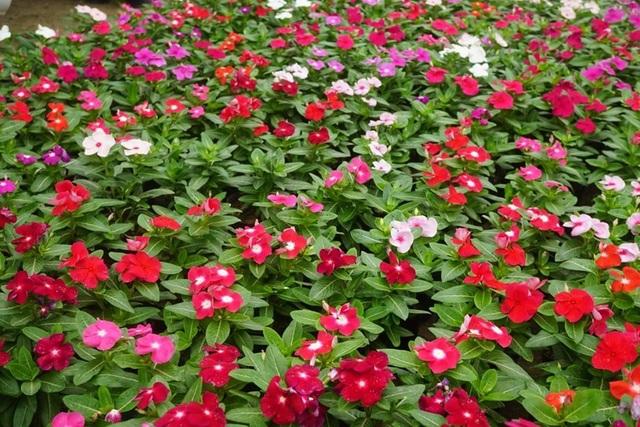 Bí quyết chăm sóc cây cảnh để vườn nhà luôn xanh mướt bất chấp nắng nóng - 3