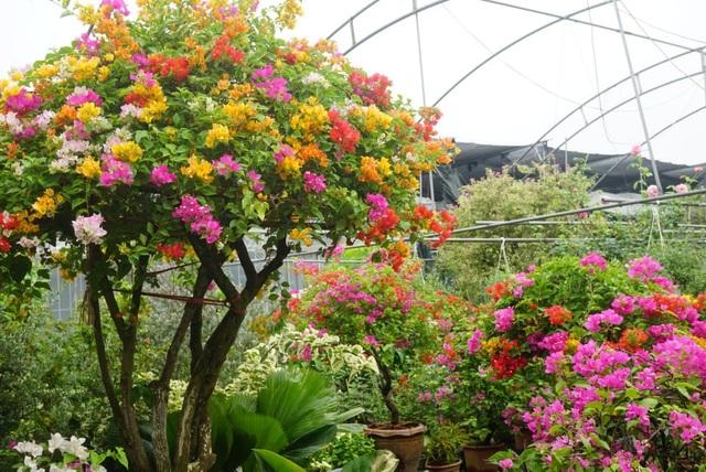 Bí quyết chăm sóc cây cảnh để vườn nhà luôn xanh mướt bất chấp nắng nóng - 6