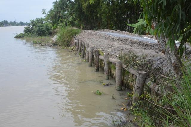 Sóc Trăng: Dân thấp thỏm lo sạt lở bờ sông ăn đường, nuốt nhà! - 4