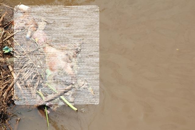 Đồng Nai: Tái diễn cảnh tràn lan vứt xác lợn chết chưa xử lý ra môi trường  - 2