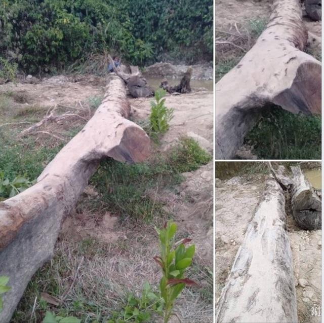 Đi mò ốc, phát hiện cây gỗ quý hàng trăm năm tuổi nằm sâu dưới lòng đất - 1
