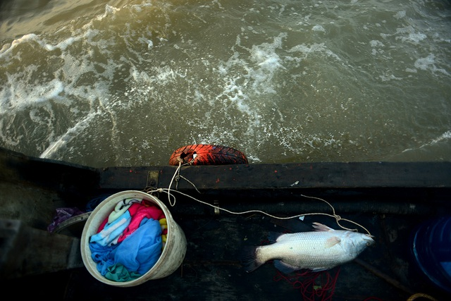 Săn cá hô.jpg