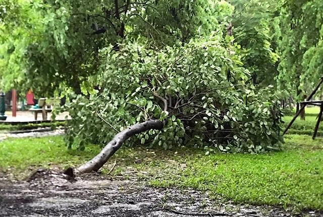 Hà Nội mưa liên tục sau bão, cây xanh gãy đổ ở nhiều nơi - 7