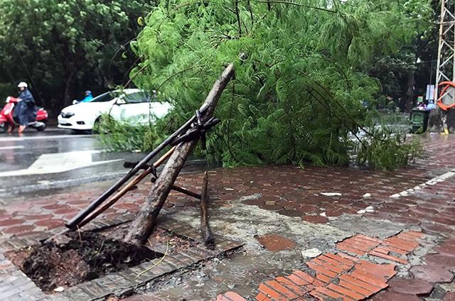 Hà Nội mưa liên tục sau bão, cây xanh gãy đổ ở nhiều nơi - 1