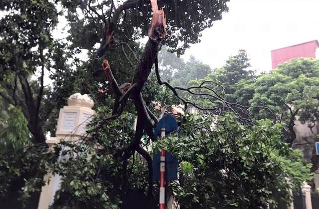Hà Nội mưa liên tục sau bão, cây xanh gãy đổ ở nhiều nơi - 8