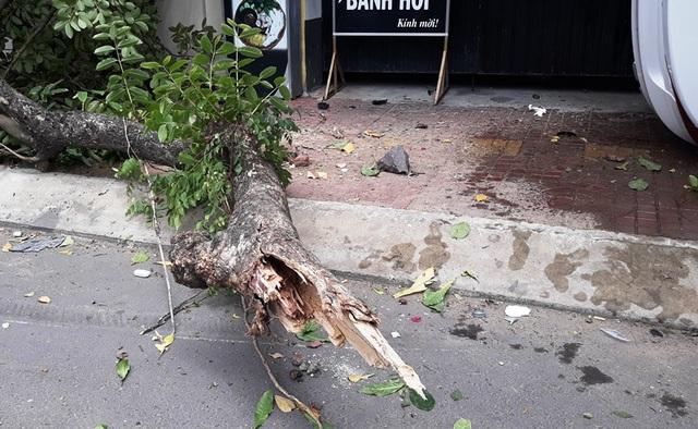 Ô tô lao lên vỉa hè tông đổ cây lớn, 2 người thương vong - 2