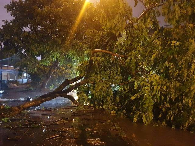 Quảng Ninh - Hải Phòng: Đường phố ngập sâu, cây xanh gãy đổ ngổn ngang sau bão số 3 - 7