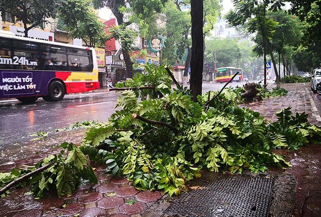 Hà Nội mưa liên tục sau bão, cây xanh gãy đổ ở nhiều nơi - 9