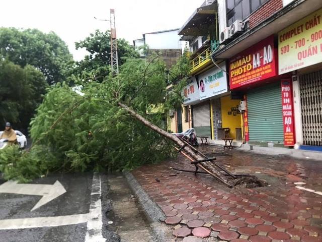 Hà Nội mưa liên tục sau bão, cây xanh gãy đổ ở nhiều nơi - 10