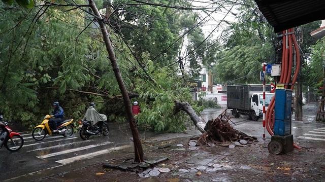 Quảng Ninh - Hải Phòng: Đường phố ngập sâu, cây xanh gãy đổ ngổn ngang sau bão số 3 - 5