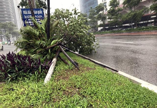 """Hà Nội: Được """"trợ lực"""" bởi khung thép, hàng loạt cây xanh vẫn bị quật đổ - 4"""