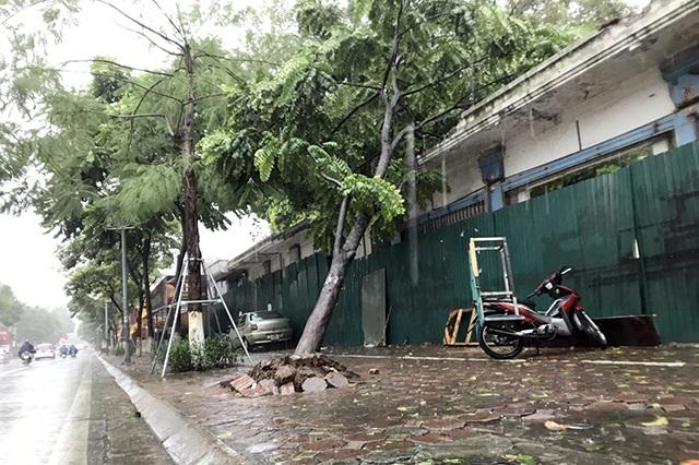 """Hà Nội: Được """"trợ lực"""" bởi khung thép, hàng loạt cây xanh vẫn bị quật đổ - 8"""