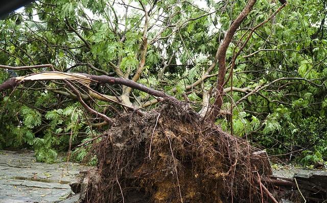 Hải Phòng:  Phố phường ngổn ngang sau bão số 3 - 11