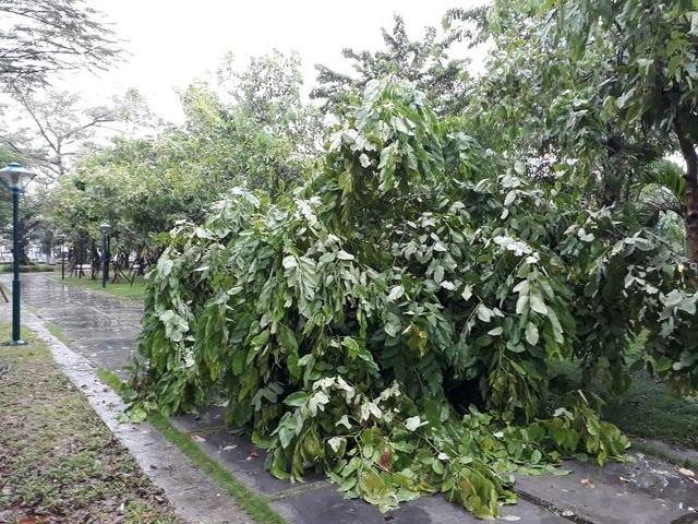 Sau bão, nhiều tuyến đường Thái Bình chìm trong nước - 8
