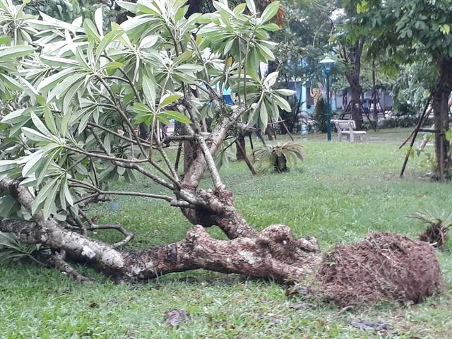 Sau bão, nhiều tuyến đường Thái Bình chìm trong nước - 7