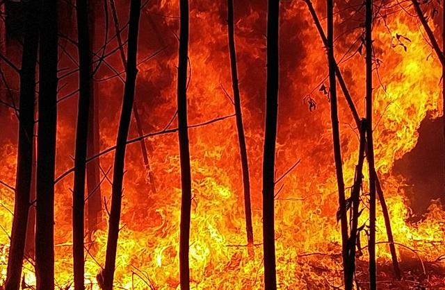 """Dân làng tự chữa cháy, thắng """"giặc lửa"""" trong đêm ở khu rừng keo - 3"""