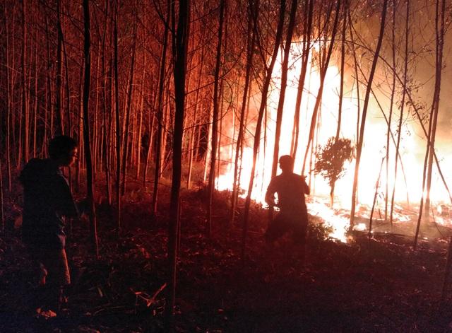 """Dân làng tự chữa cháy, thắng """"giặc lửa"""" trong đêm ở khu rừng keo - 1"""