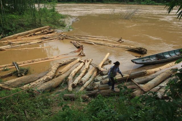 Liều mình vớt gỗ trong lũ dữ - 1