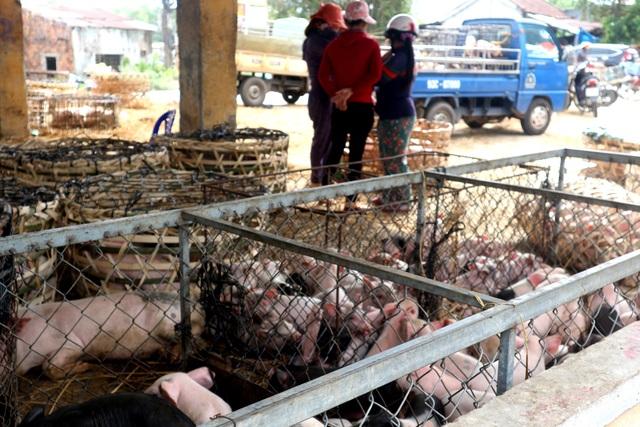 Kiểm soát chặt chẽ chợ đầu mối khi dịch tả lợn Châu Phi lan rộng - 4