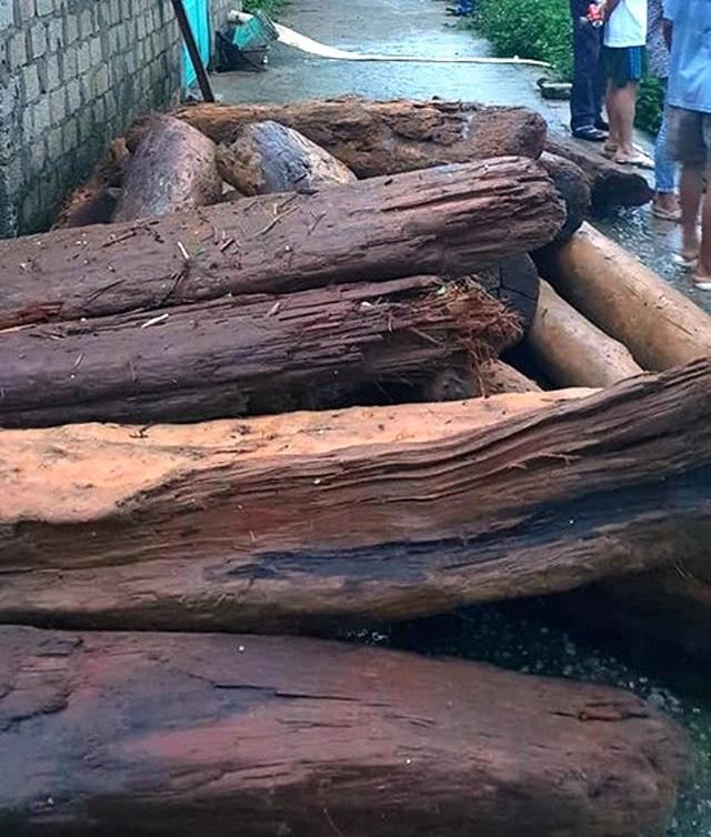 Liều mình vớt gỗ trong lũ dữ - 5