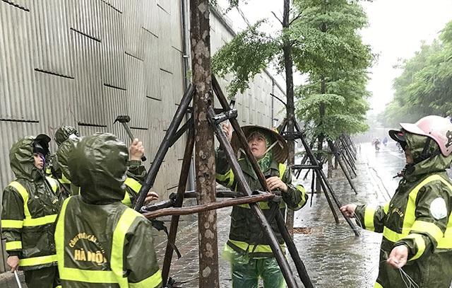 """Hà Nội: Được """"trợ lực"""" bởi khung thép, hàng loạt cây xanh vẫn bị quật đổ - 7"""